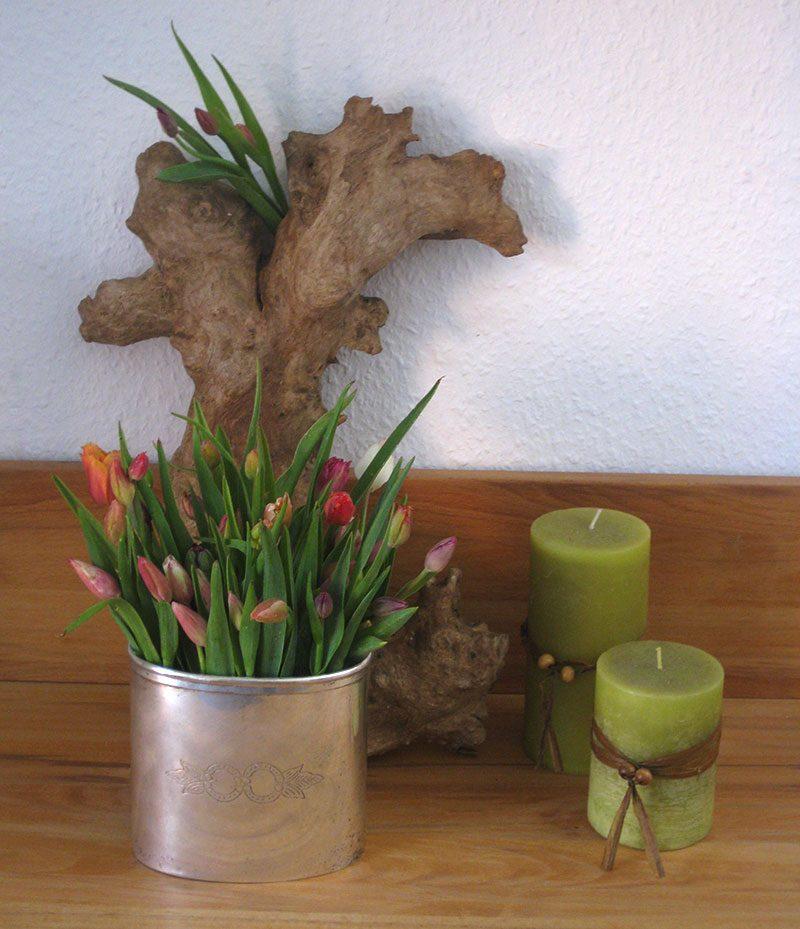 Kleine Tulpen Tulpenzwerge