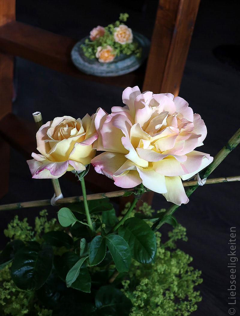 Blüten der Rose Gloria Dei