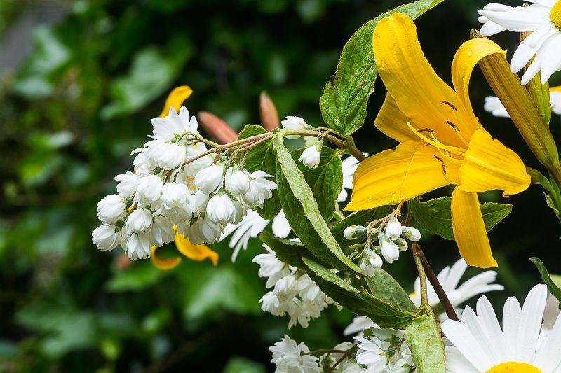 Gelbe Lilie und weiße Blumen