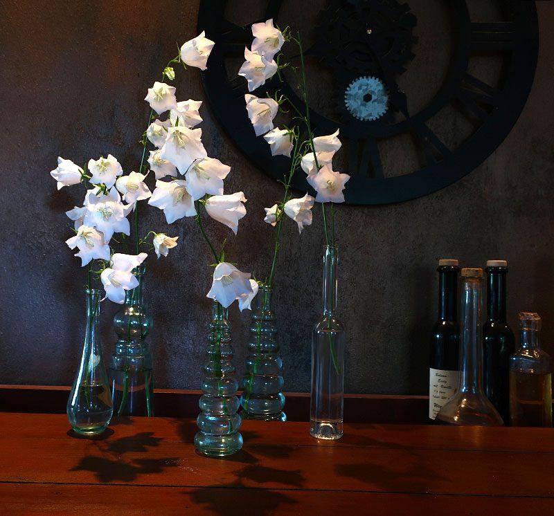 weiße Glockenblumen vor dunkler Wand