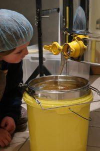 Honig fließt aus der Honigschleuder