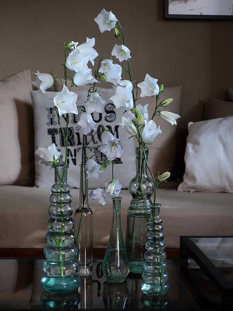 Blumen, Blumenvasen mit weißen Glockenblumen