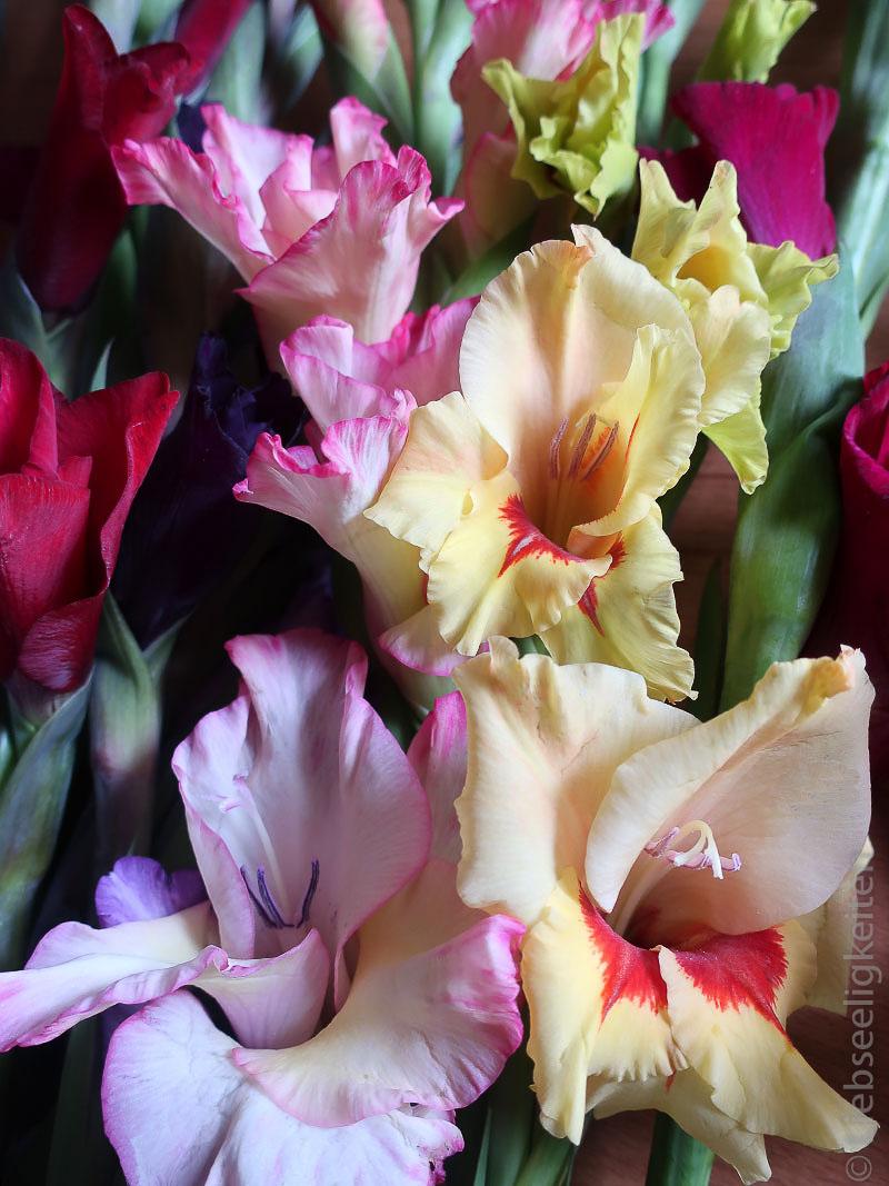 Blüten - Gladiolen