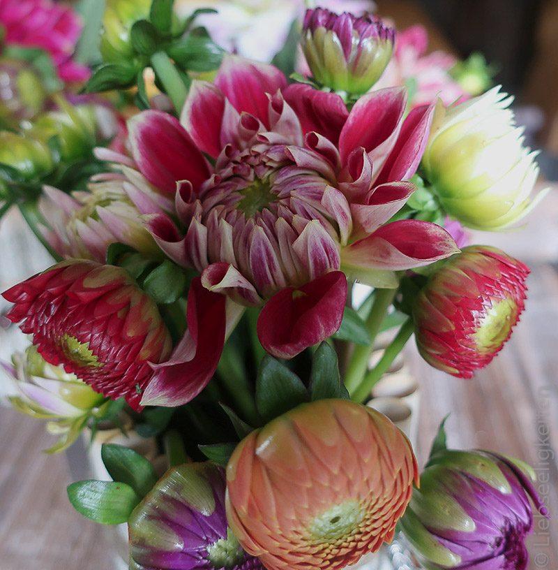 Blume -Dahlien - 1