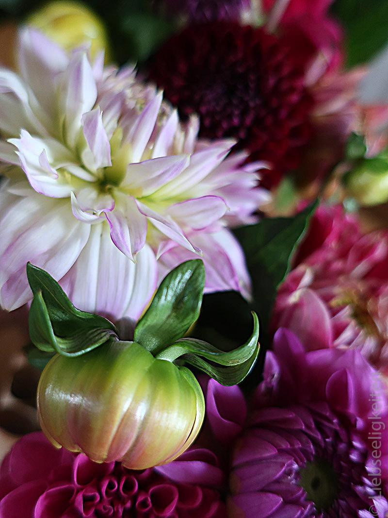 Blume - Dahlien - 7