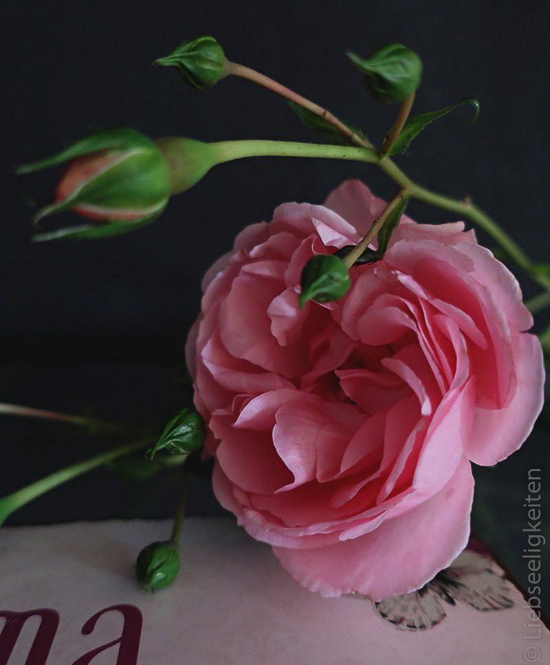 Rose und Grußkarte für Oma, Rosenblüte