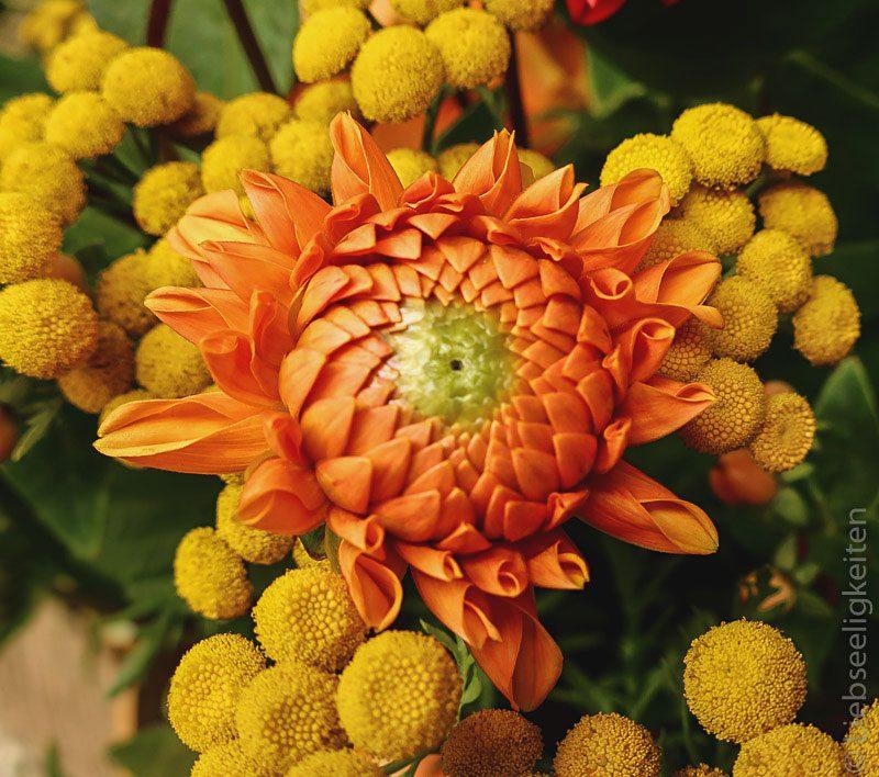 Orange Dahlie mit Rainfarn - Ein Blumenstrauß in Gelb und Orange