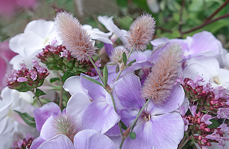 Phlox, Thymian und Beikraut - Blumenstrauß