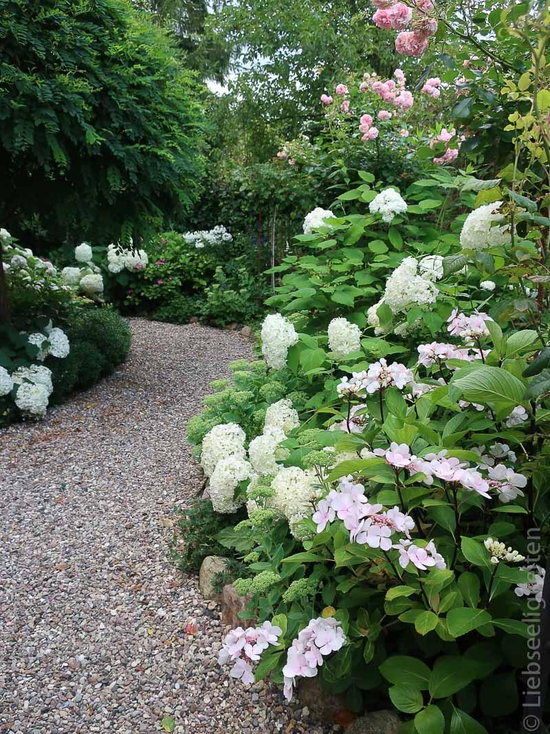 Weißer Garten - weiße Hortensien