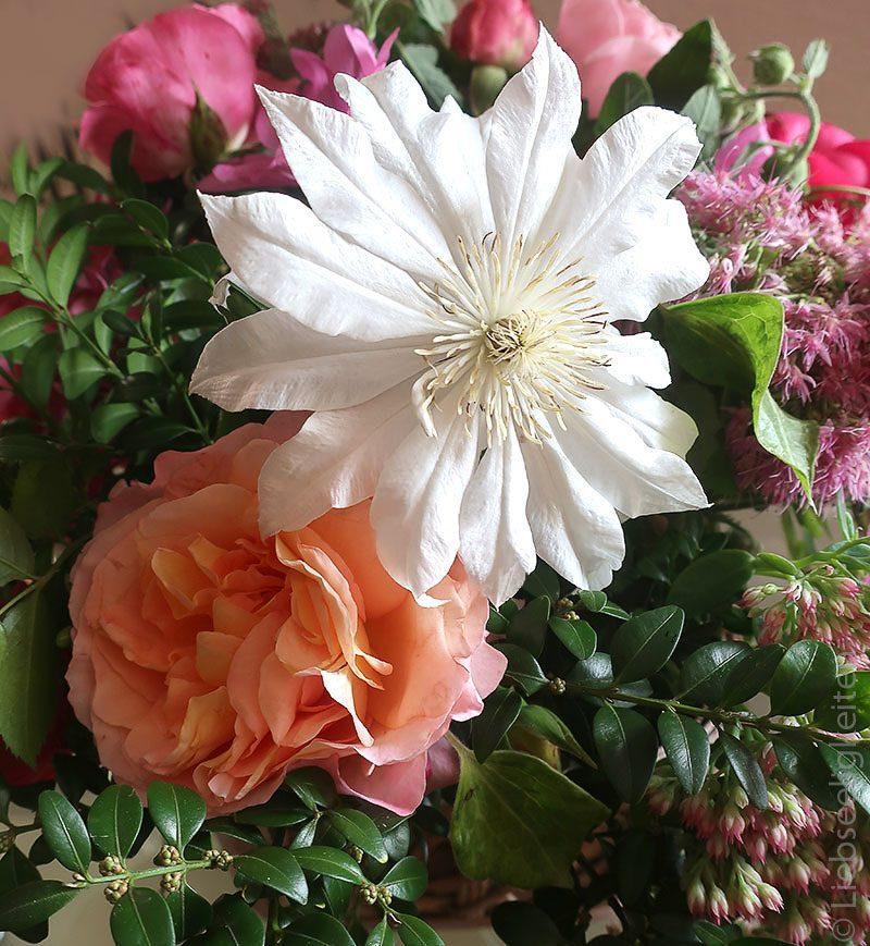 Blüte der Clematis Arctic Queen und der Rose Aprikola