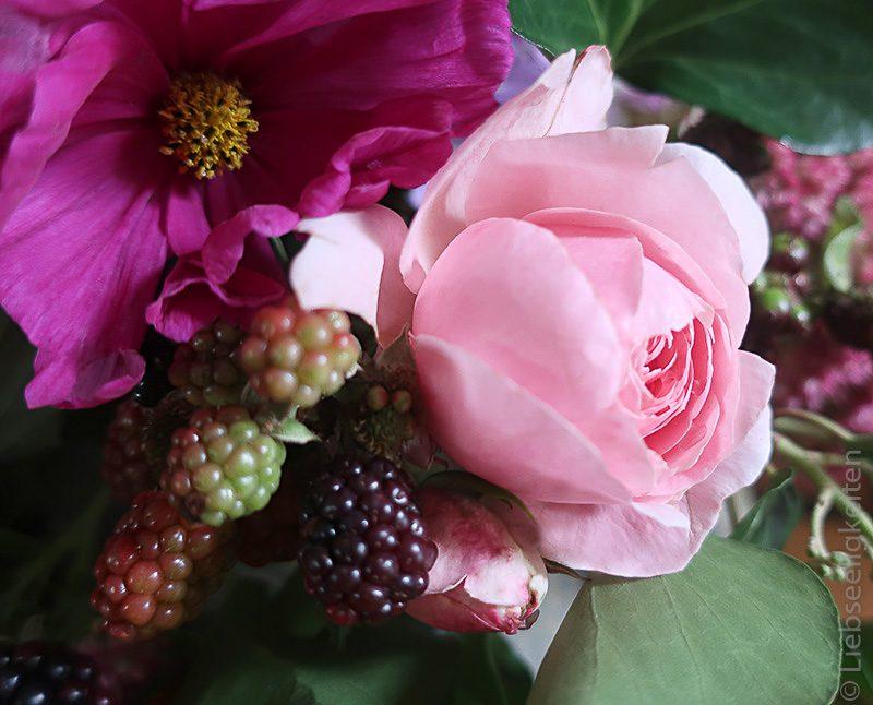 Herbst - Rosenblüte - Brombeeren und Cosmea