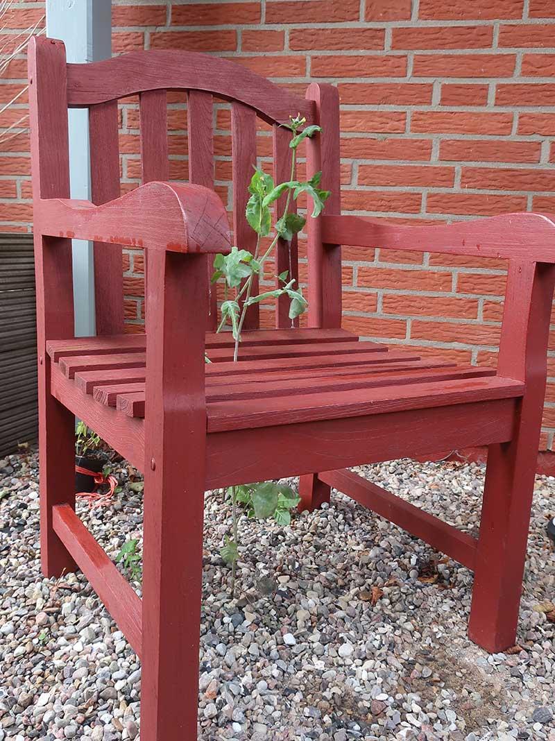 Hohes-Unkraut-wächst-durch-Gartenstuhl