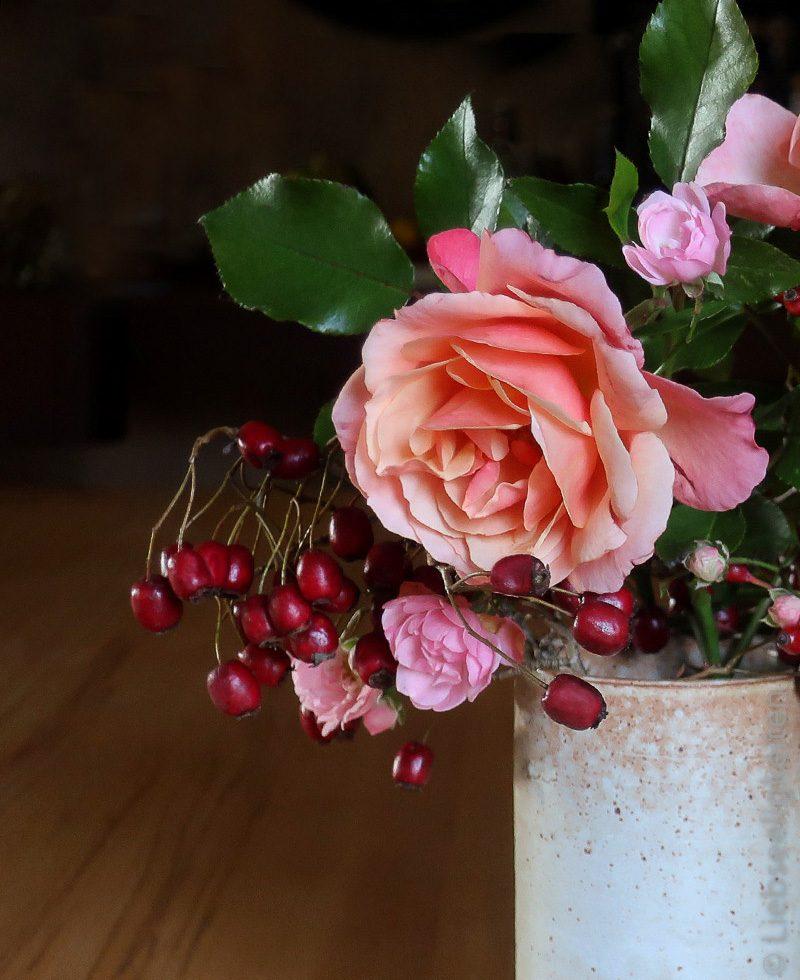 Orange Rosenblüte - Rose und Beeren