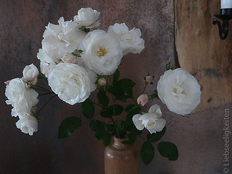 Rosen - Blumenstrauß - weiße Rosen