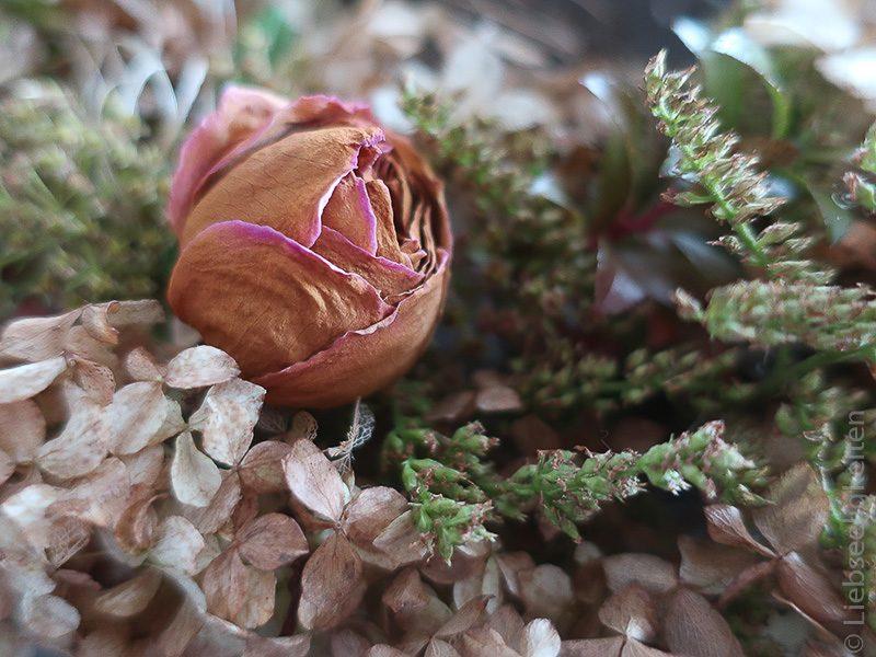 vertrocknete Rose im Herbstkranz - Herbst