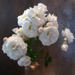 weiße Rosen vor dunklem Hintergrund