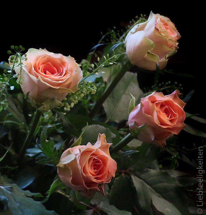 4 Rosen - rosenblüten - edelrosen