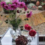 cosmea - rosen - hortensie -fridayflowerday