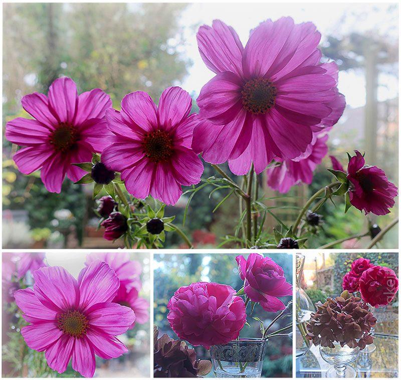 verschiedene Blumen in der Vase - cosmea - rose - hortensie