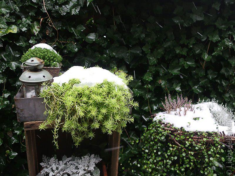 Der erste Schnee-Blumendeko im Garten
