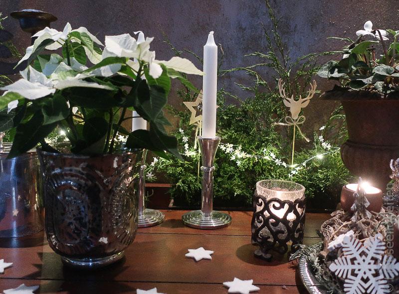 weißer christstern - weihnachtsdeko - kerzenleuchter - tannenzweige -