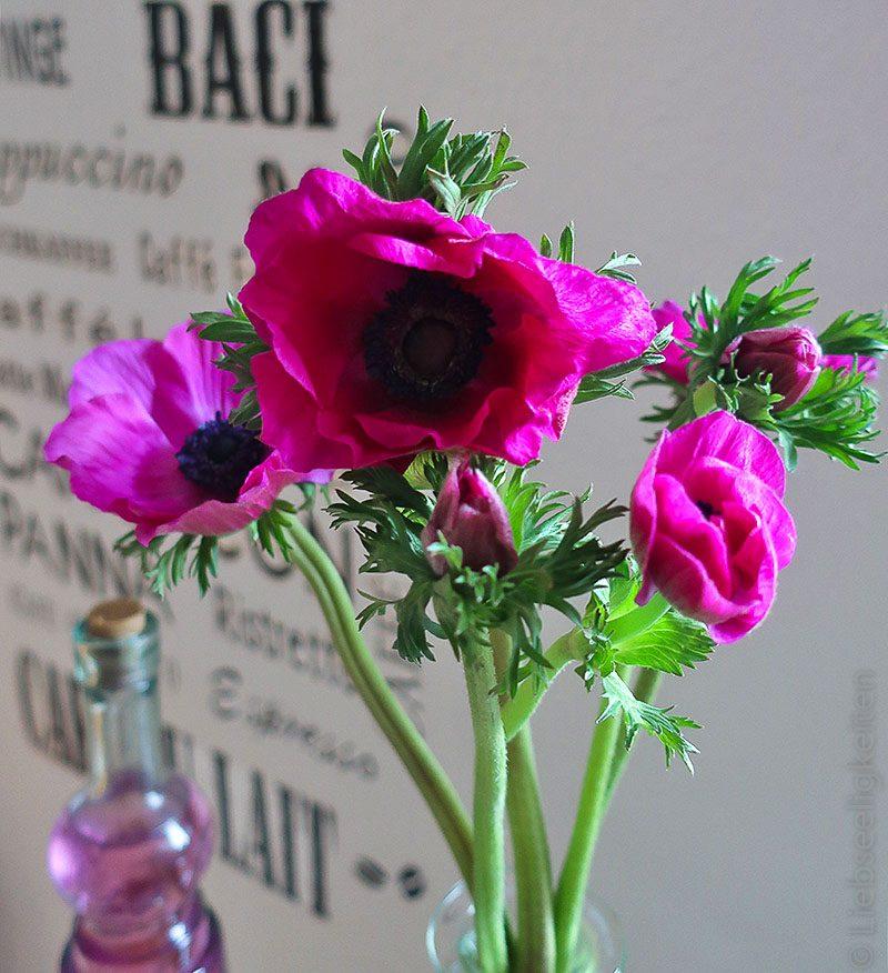 Anemonen in der Vase