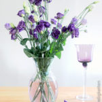 Prärieenzian in der Vase - Eustoma - Japanrose