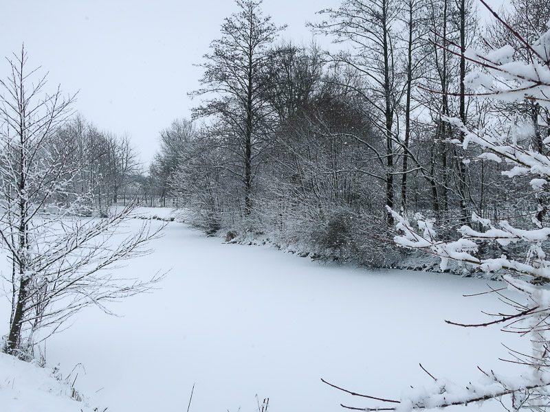 Teich - Schneelandschaft