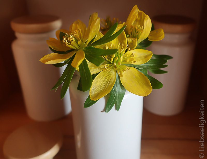 Winterlinge in der Vase