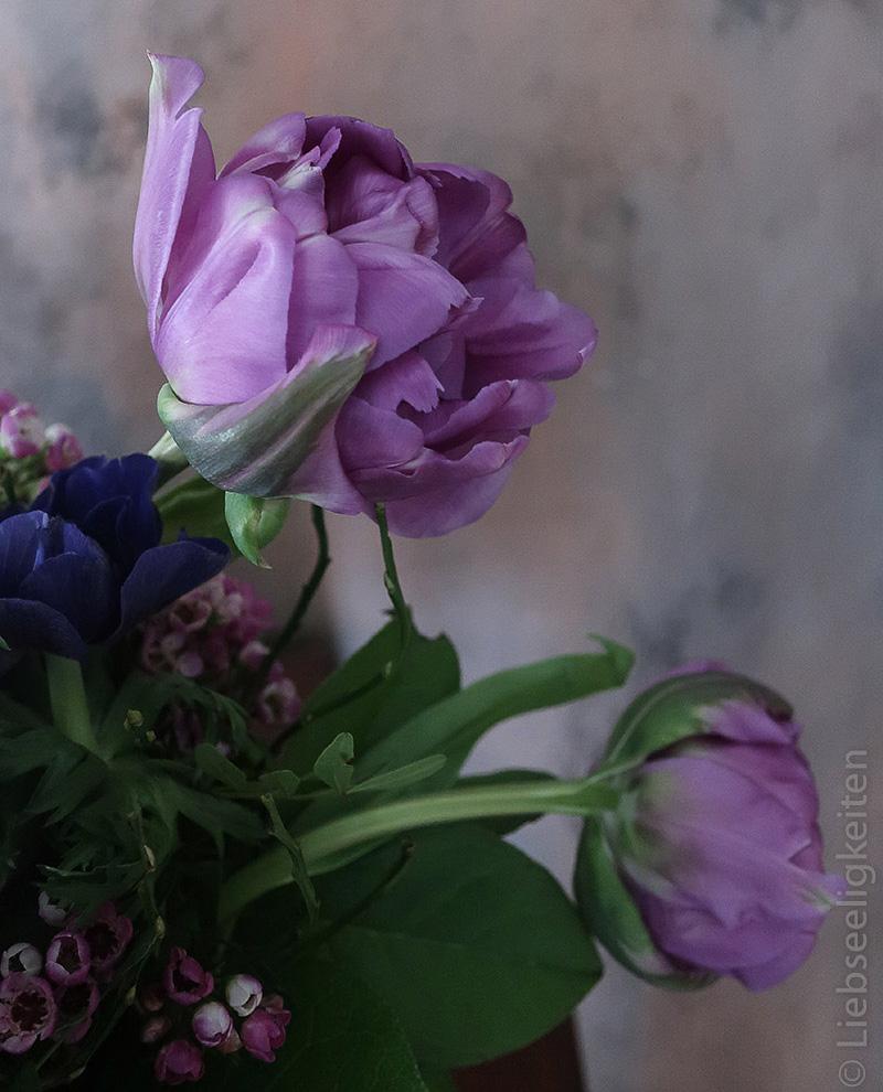 zwei Tulpenblüten