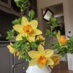 Gelbe Narzissen mit oranger Krone