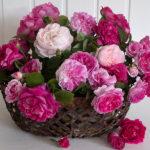 Ein Korb voll Historischer Rosen - Blumendeko - Duftrosen - alte Rosensorten