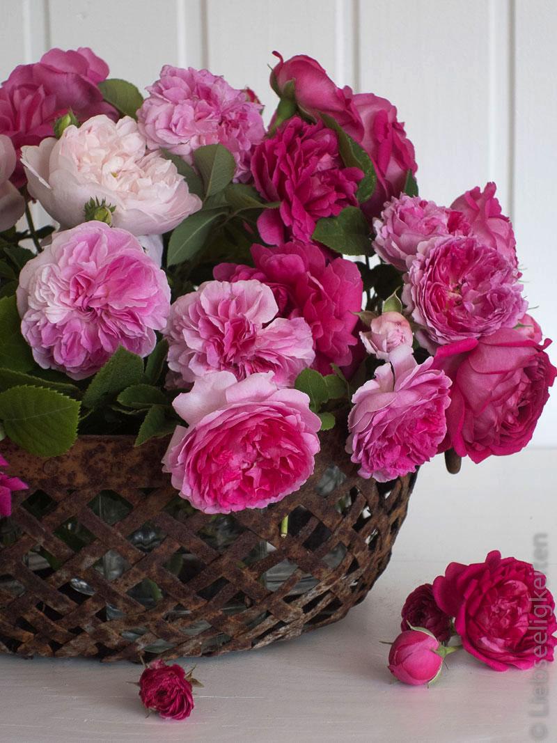 Historische Rosen im Korb