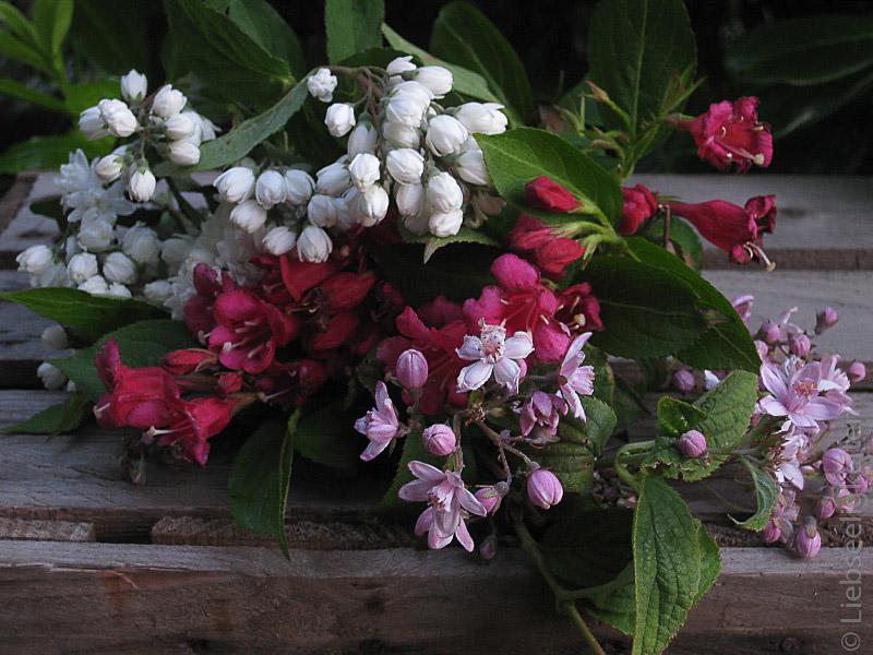 allerlei Strauchblüten