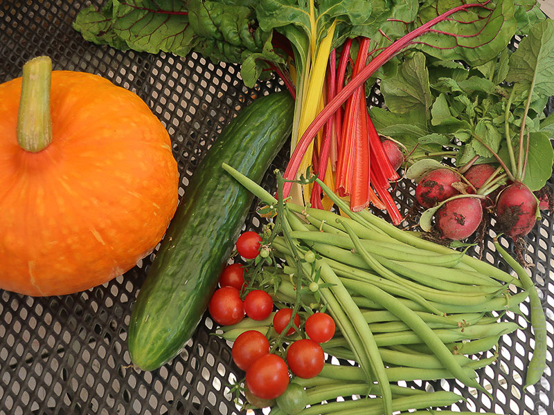 Ernte aus dem Schrebergarten - Gemüse
