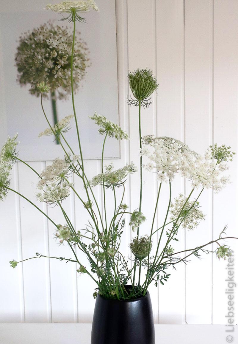 Wilde Möhre in der Vase