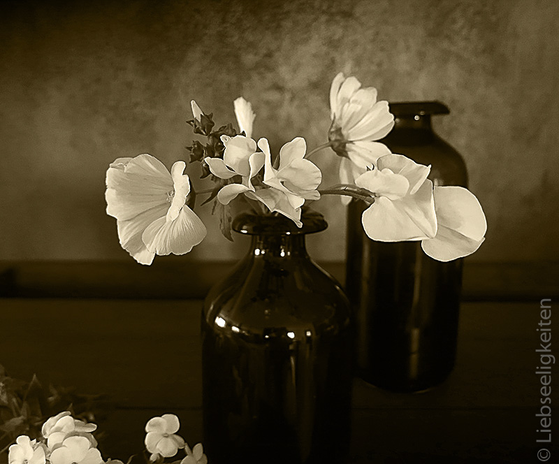 weiße Blumen - Sepia