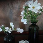 weiße Blumen - weiße Cosmea - weiße Bechermalve - weißer Phlox - weiße Wicken