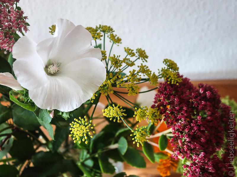 Herbstblüher - Bechermalve, Fette Henne und Fenchel