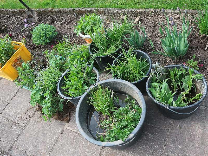 Neue Pflanzen für den Schrebergarten