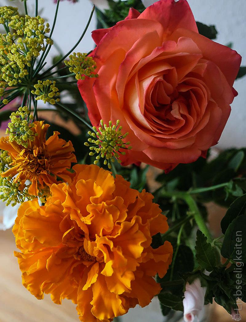 Orange Rosenblüte und Blüte der Tagetes