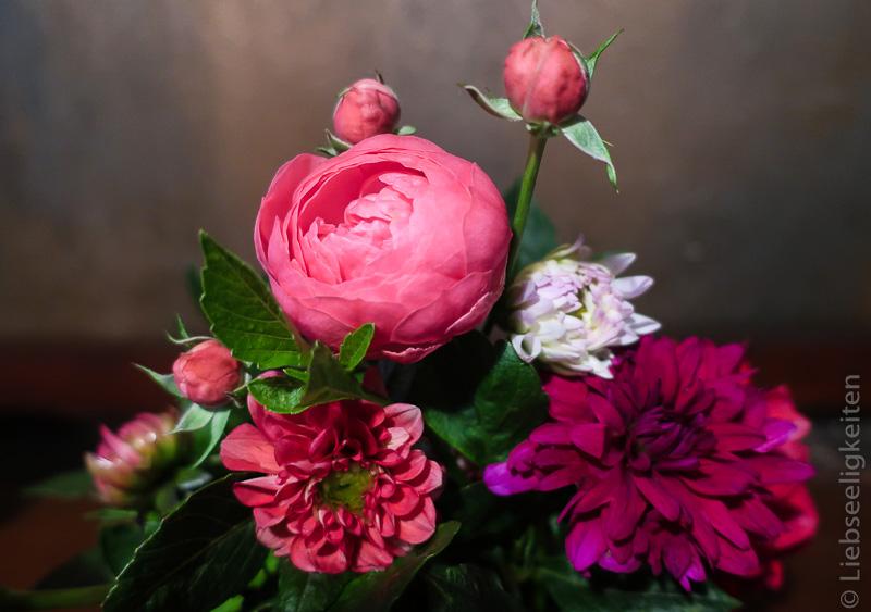 Rose Raubritter und Dahlien