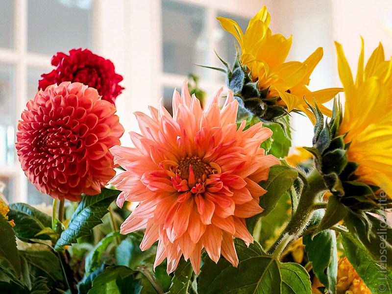 Dahlien und Sonnenblumen