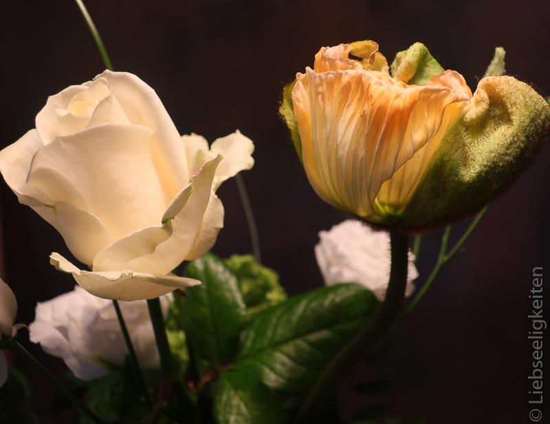 Weiße Rose und Kalifornischer Mon