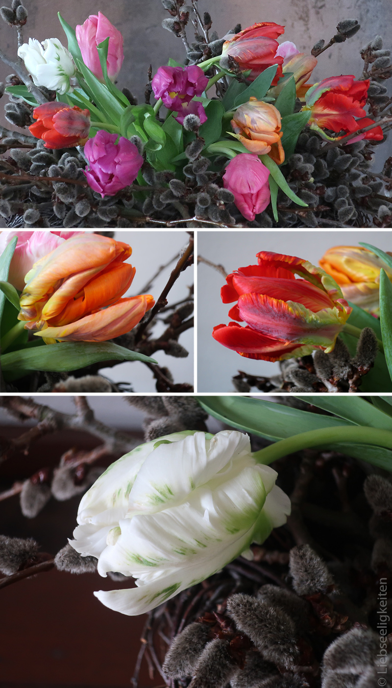 Papageientulpen - Tulpen