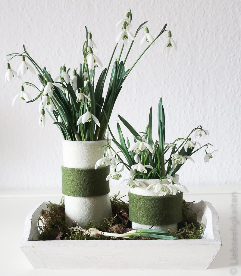 Schneeglöckchen in Vasen