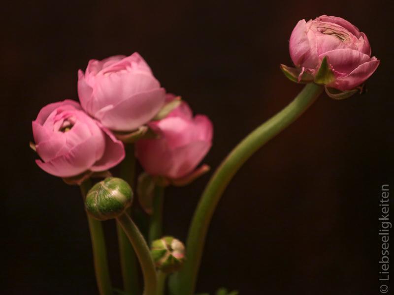 Ranunkelblüten