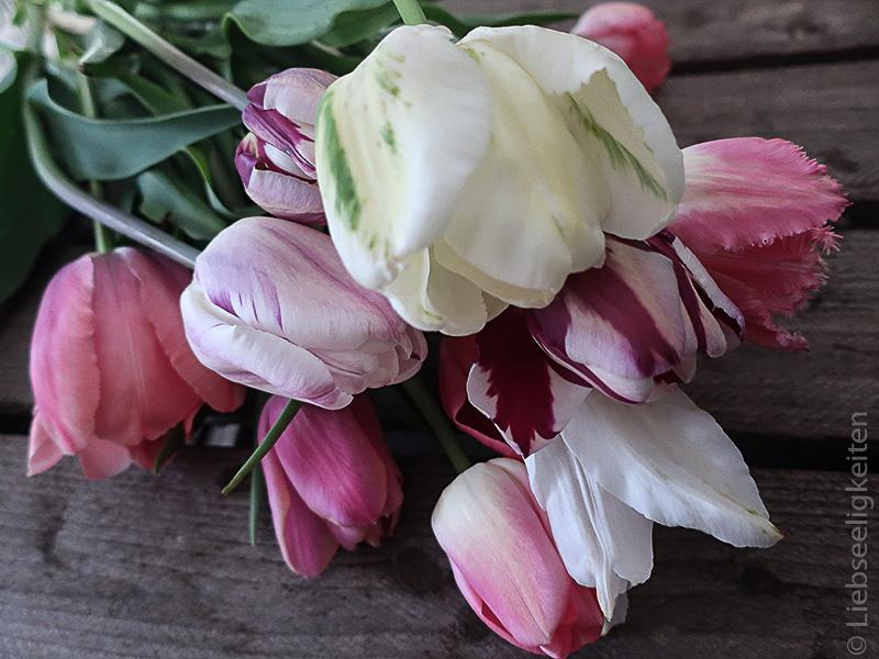 Tulpen - Tulpenstrauß - verschiedene Tulpen