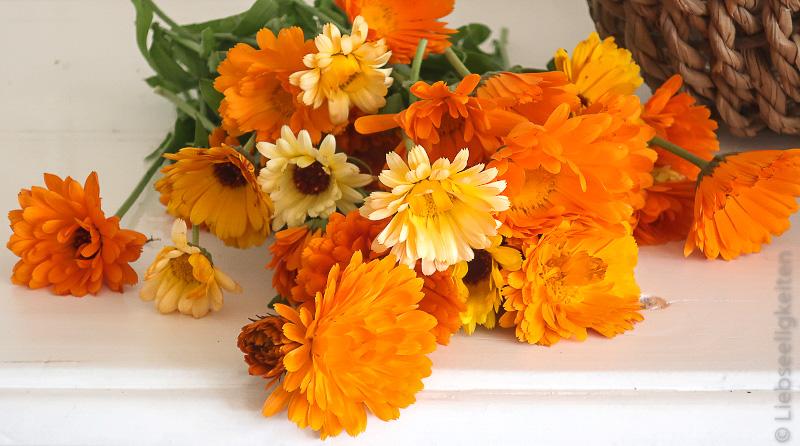 Calendula - Ringelblumen