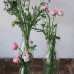Ranunkeln - rosa Ranunkeln - Ranunkeln in der Vase